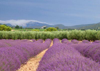 Photo de St Pantaleon les Vignes